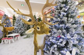 christmas-displays-auckland-lynnmall-0